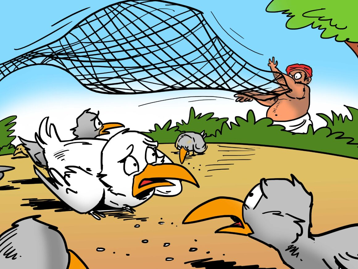 The hunter cast his net on the birds